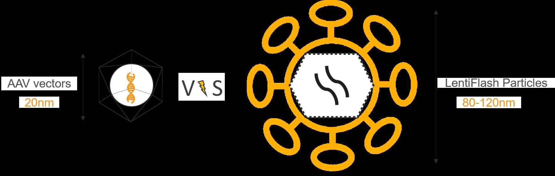 AAV vs LentiFlash