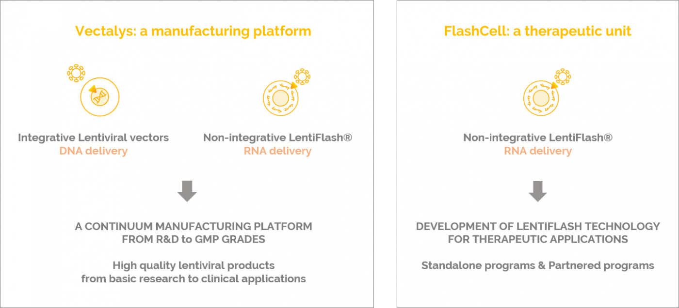 Flash Therapeutics the merging of Vectalys and FlashCell